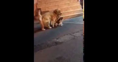 Dog Stops a Cat Fight from Going Down