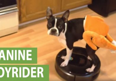 Thanksgiving Foods You Shouldn't Give Your Dog