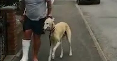 Dog Limps Along With His Owner
